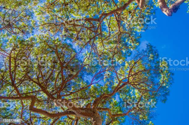 Photo of blue sky behind green trees with sunlight