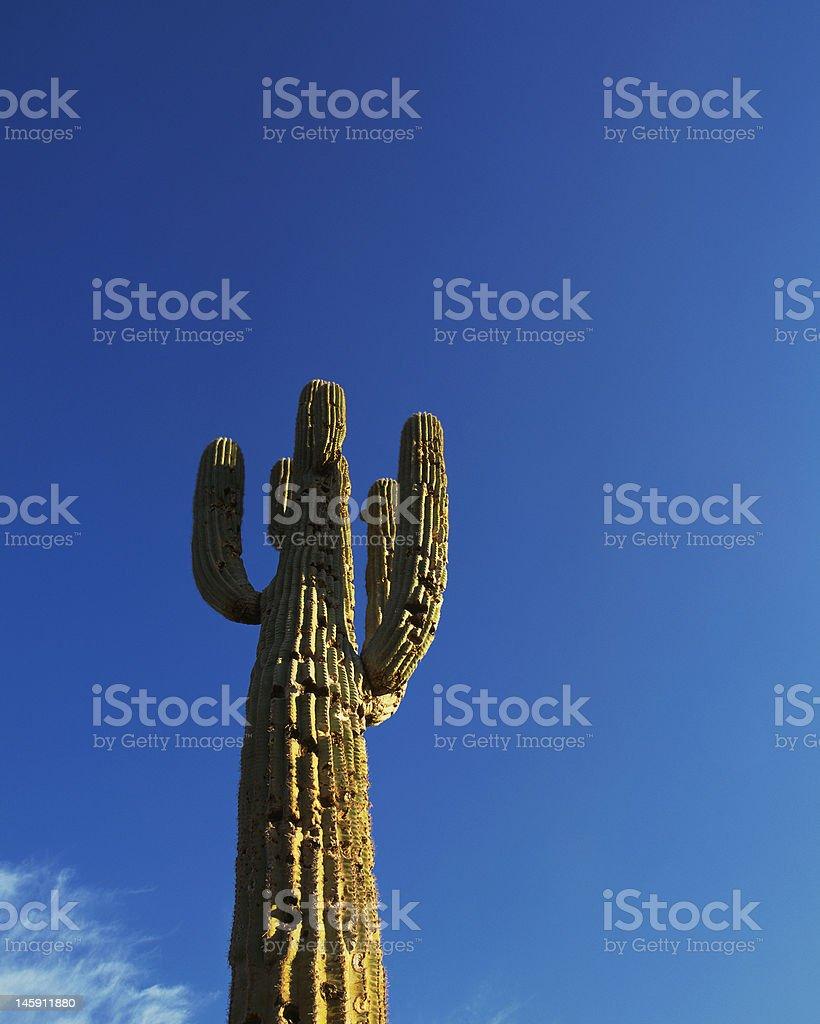Blue Sky Cactus royalty-free stock photo