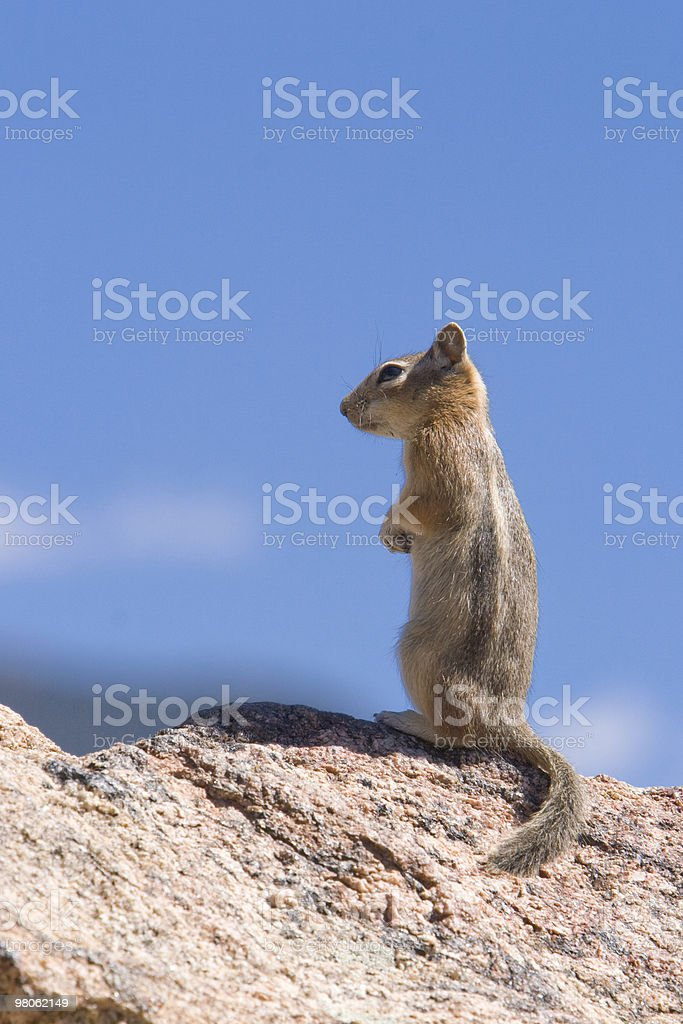 Blue Sky Chipmunk Profile royalty-free stock photo