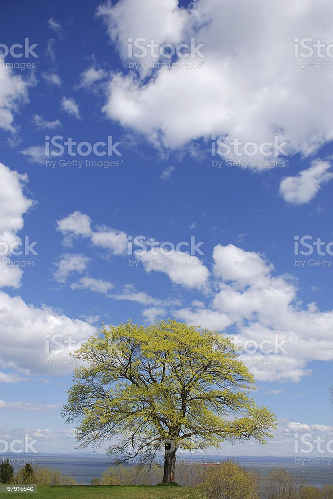 Blue sky, clouds and a tree royalty-free stock photo