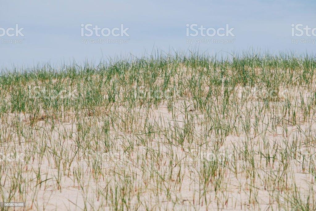 Blauwe hemel, gras en zandduinen - Royalty-free Beschrijvende kleur Stockfoto