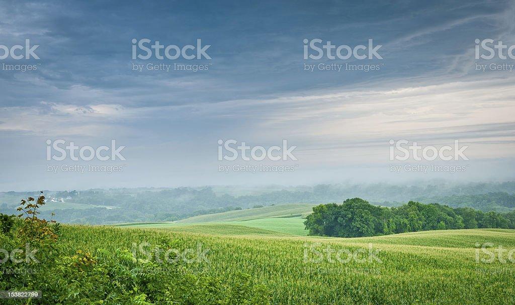 Blue Sky Green Corn stock photo