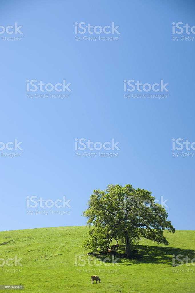 Blue sky, green grass and pasture in Napa Valley. royalty-free stock photo