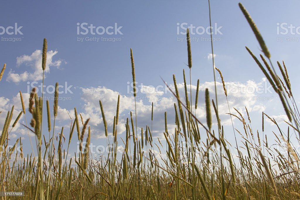 Blue Sky Hayfield stock photo