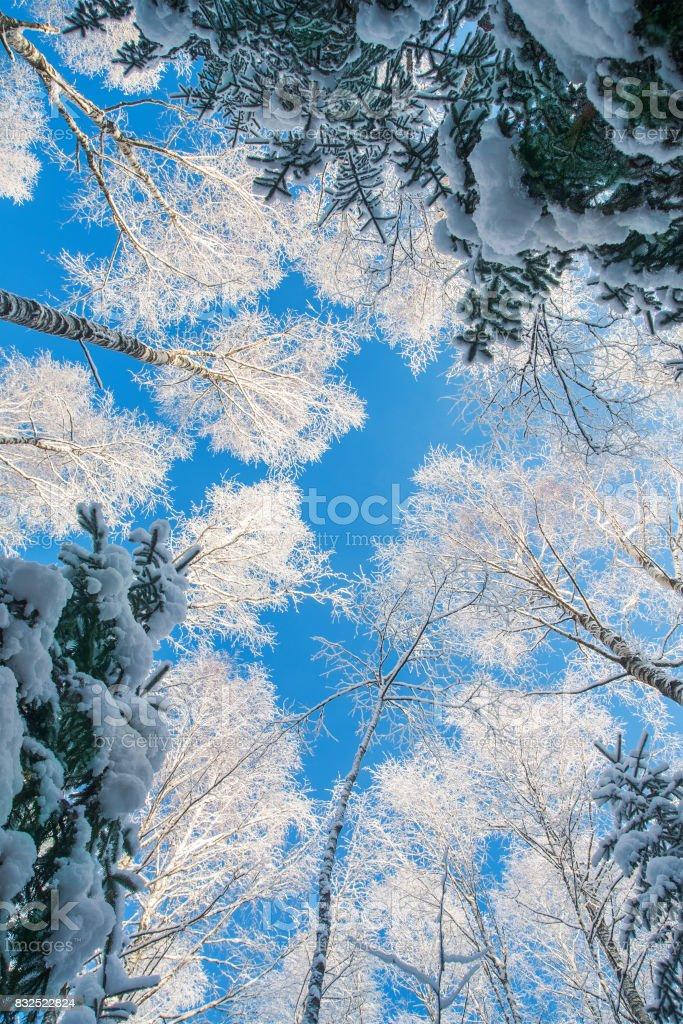 Blauer Himmel mit schönen winter forest – Foto