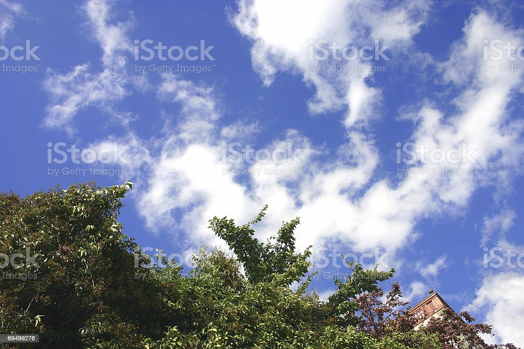 Blue sky over green bushes royaltyfri bildbanksbilder