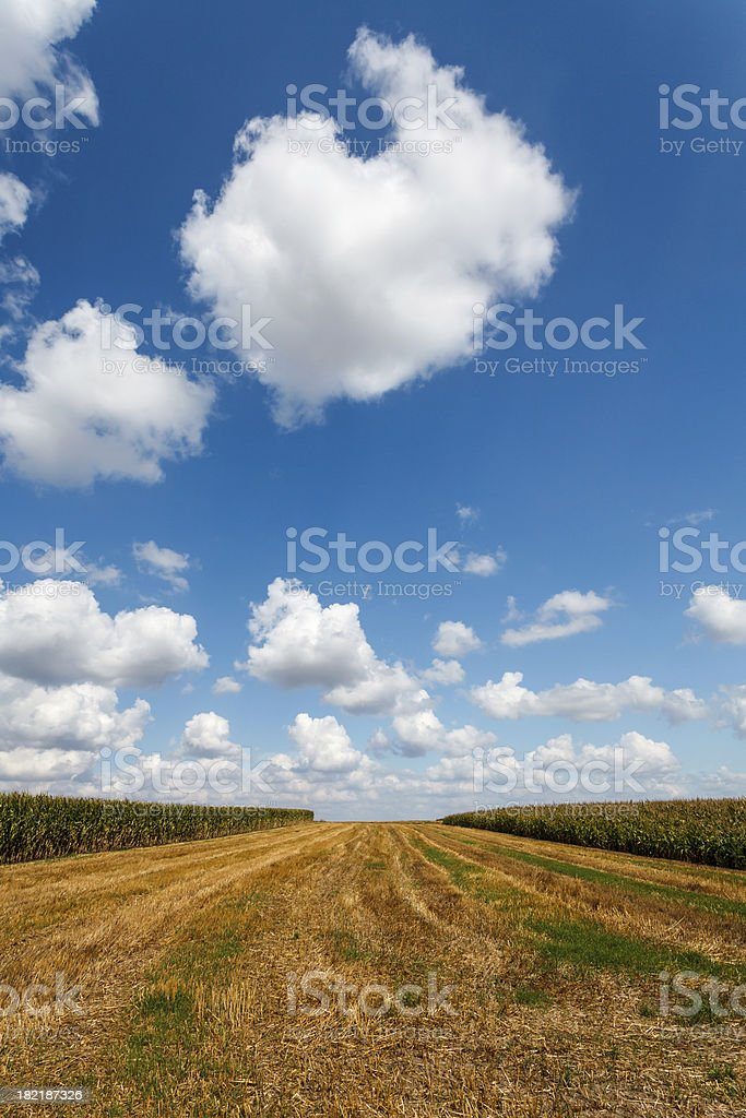Blue sky over the stubble royalty-free stock photo