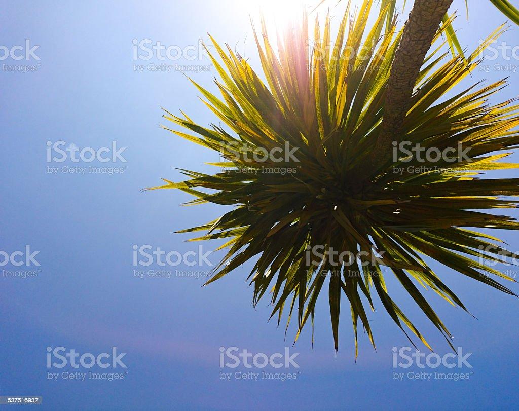 Blue sky palm stock photo