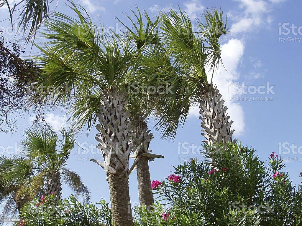 Blue Sky & Palm Trees royalty-free stock photo