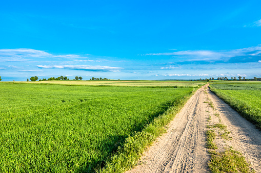 Blue sky, road and field with green grass in spring, countryside landscape