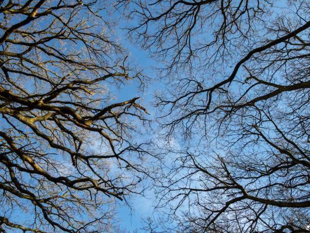 Blue sky through bare winter tree branches stock photo