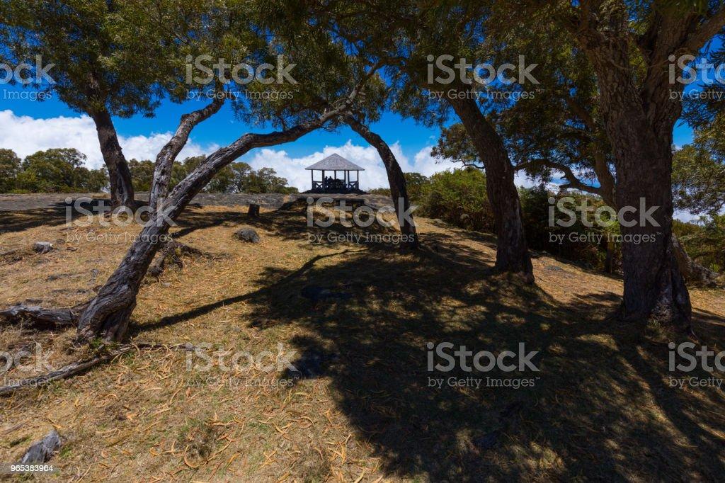 리유니언 섬 세인트 폴에서 우물에서 나무 푸른 하늘 - 로열티 프리 0명 스톡 사진