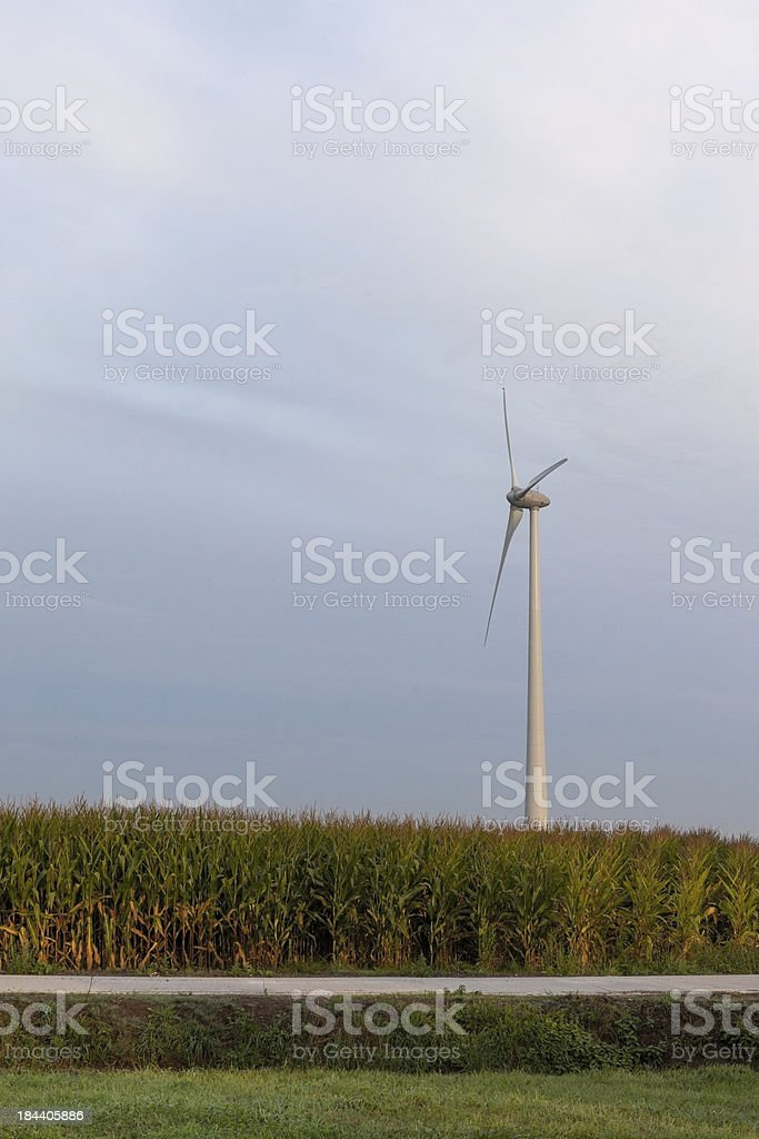 Blue sky whit Wind turbine and corn field royalty-free stock photo