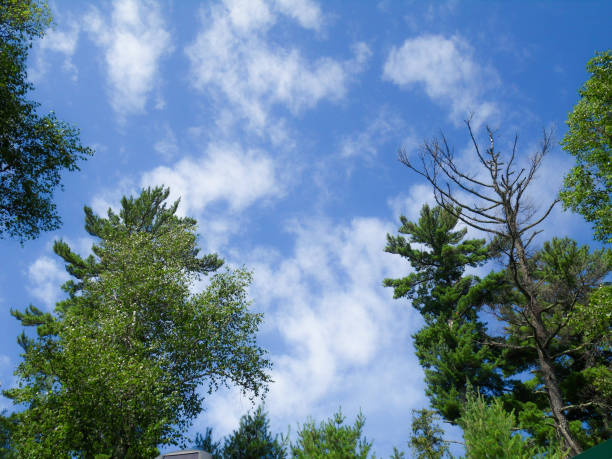 Blue sky, white clouds and green trees stock photo