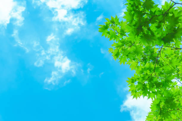 blue sky with fresh green stock photo