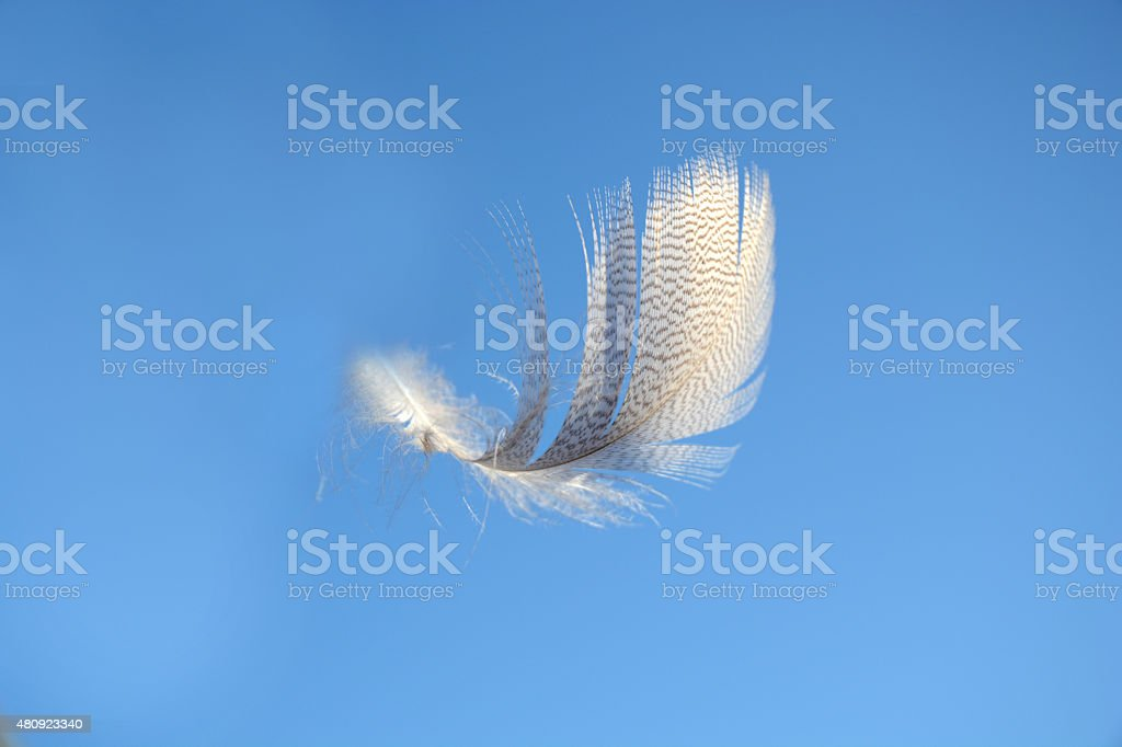 blue sky with light white  fluffy feather floating in wind stock photo