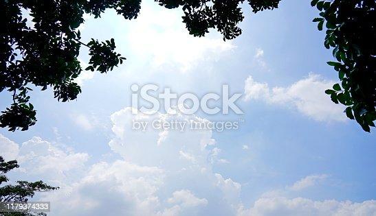 Springtime, Summer, Tree, Beech Tree, Forest Save