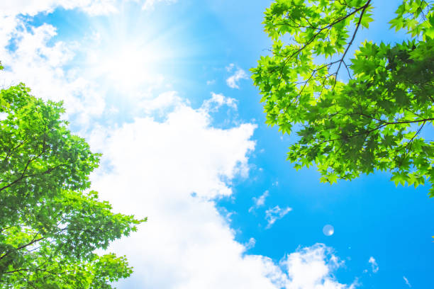 blue sky with sun - forest bathing foto e immagini stock