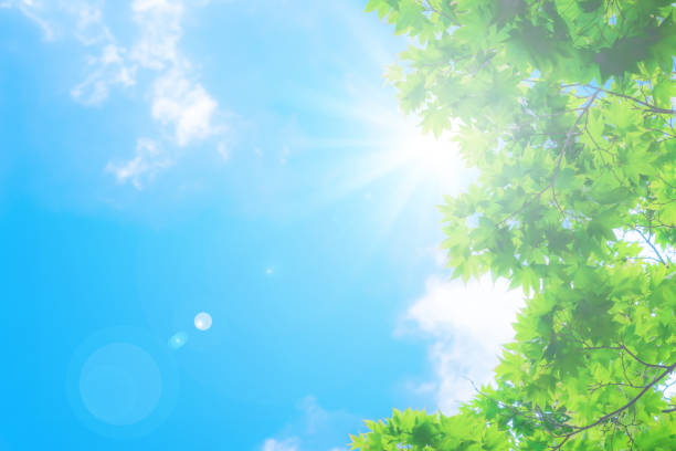 blue sky with sun blue sky with sun lush foliage stock pictures, royalty-free photos & images