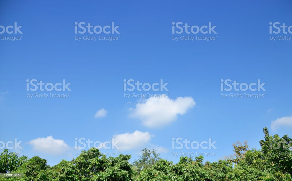 Blauer Himmel mit weißen Wolken über dem grünen Baum. – Foto