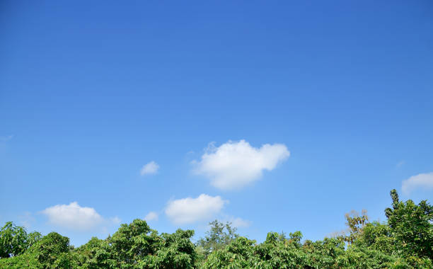 Blue sky with white clouds above green tree . stock photo