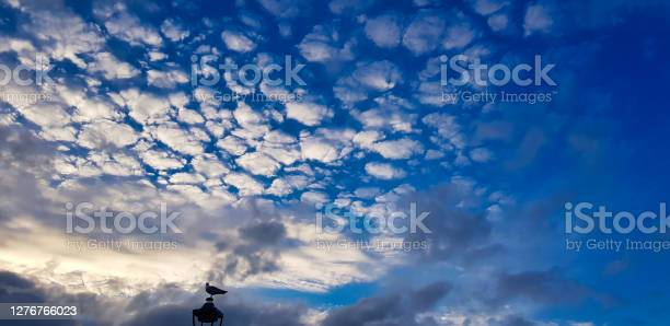 Photo of Blue sky with white clouds. Cirrocumulus and a dove on the top of a roof