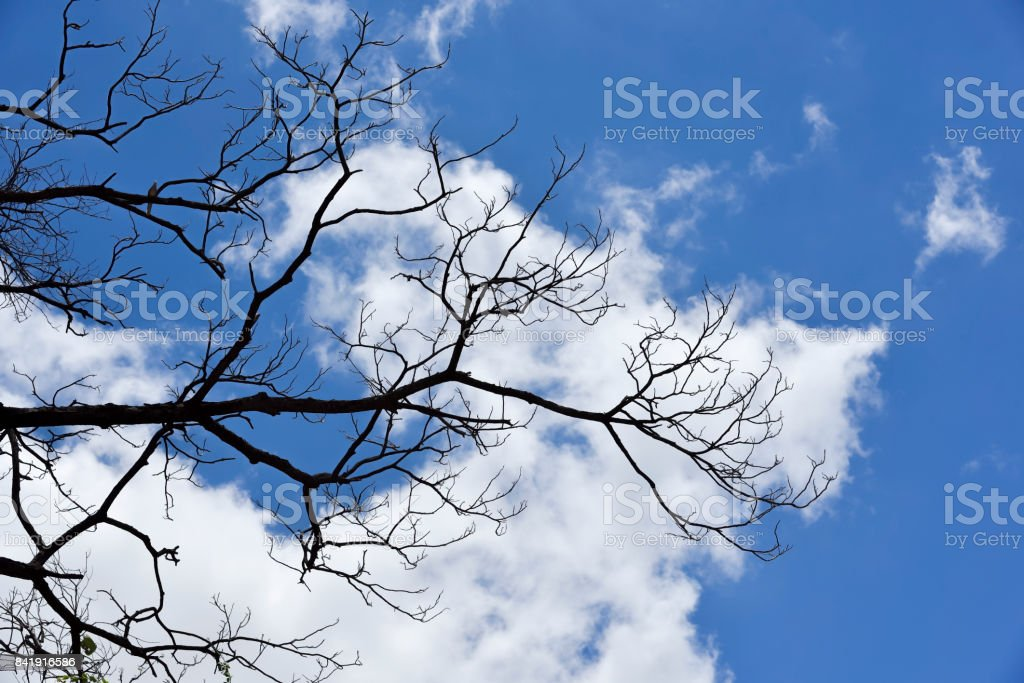 blue skys and white clouds background stock photo