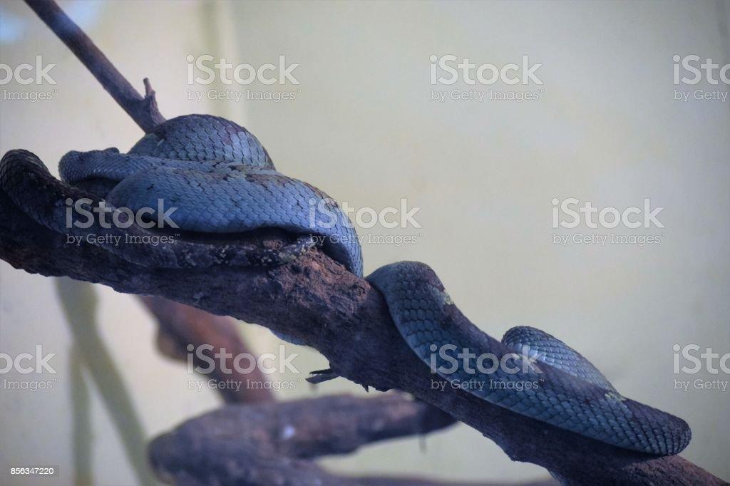 blue snake stock photo