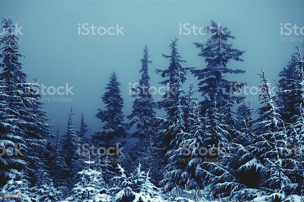 Blue Snow - Winter Wonderland 5 stock photo