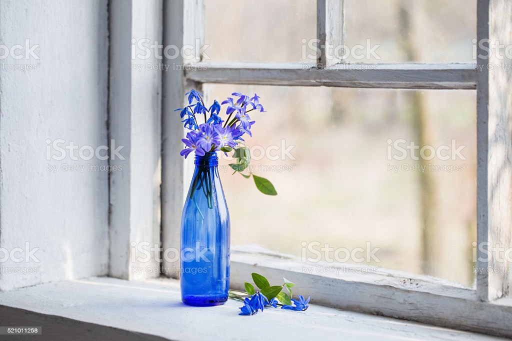 Blue snowdrop flowers in a dirty window in the spring stock photo