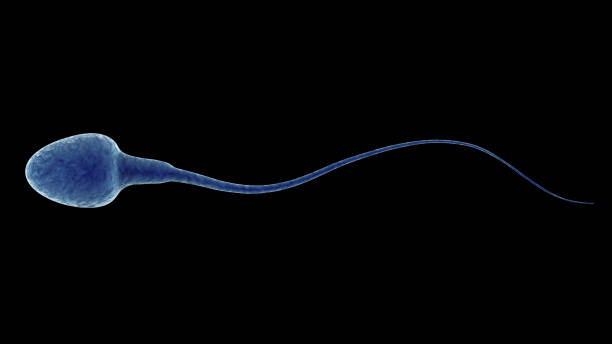 blue sperm isolated on black - human sperm stock photos and pictures