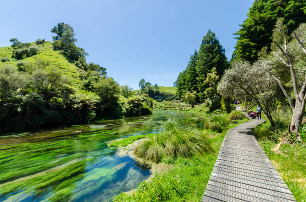Blue Spring which is located at Te Waihou Walkway,Hamilton New Zealand. It internationally acclaimed supplies around 70% of New Zealand's bottled water. stock photo