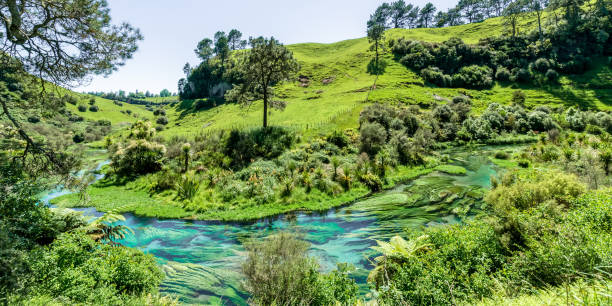 Blue Spring which is located at Te Waihou Walkway,Hamilton New Zealand. stock photo