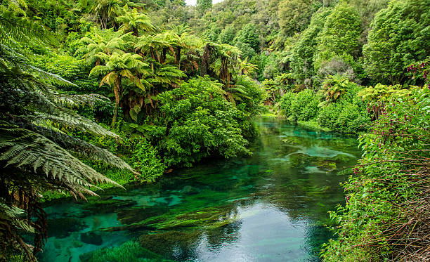 Blue Spring which is located at Te Waihou Walkway,Hamilton. stock photo
