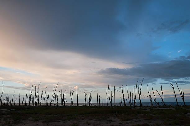 Azul atardecer con cadáveres de palmeras en la playa - foto de stock