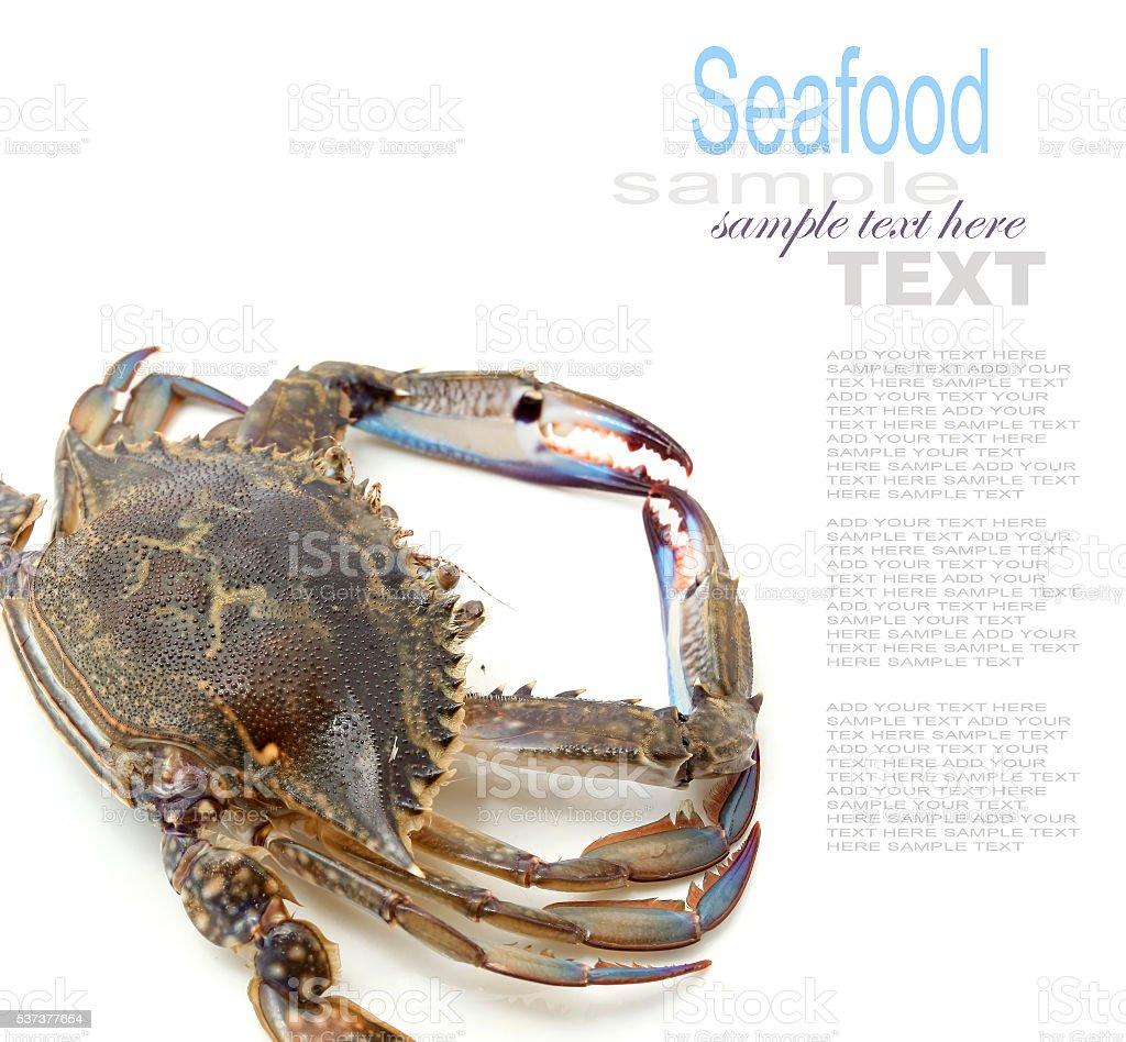Blue Swimmer crab stock photo