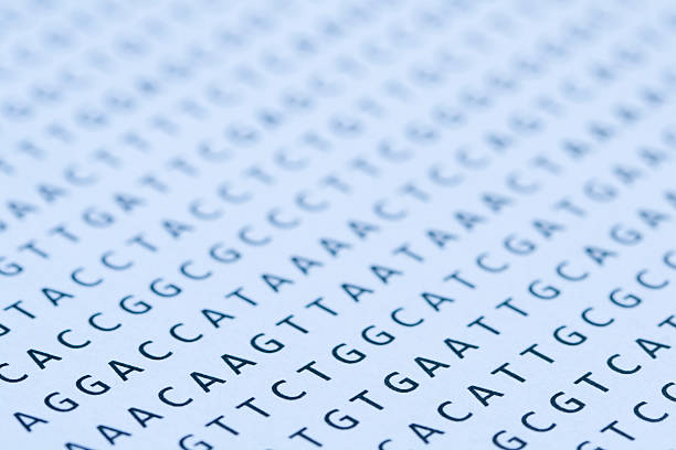 Blue tinted printout of DNA nucleotide sequence on paper Macro of a nucleotide sequence print out. Selective focus with very shallow depth of focus, sharpest focus on the letters in left foreground, the letters in the mid to background, and front left corner, are out of focus, but still recognizable. Blue tint. This is a photograph of a printout on paper and at 100% the paper texture and imperfections of the letters are visible. Makes a great background for PowerPoint presentation for molecular biology, genetics, systematics, genomics or evolution lectures. nucleotide stock pictures, royalty-free photos & images