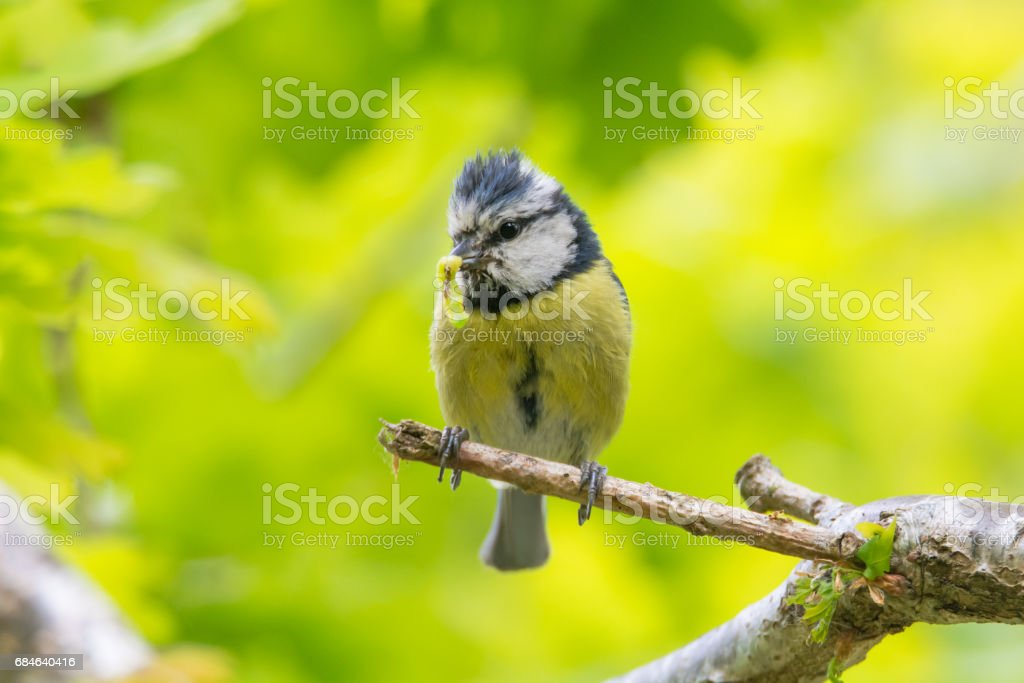 16 tit and young
