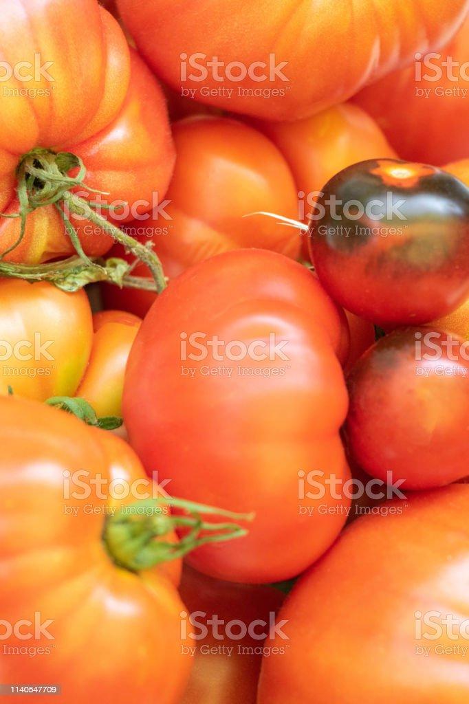 différentes variétés de tomates anciennese, tomate bleue, tomate...