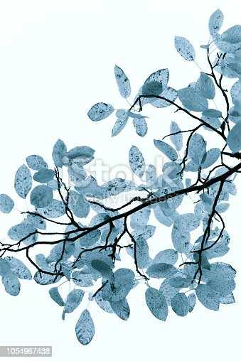 istock blue toned  autumn leaves and black branches white backround 1054967438