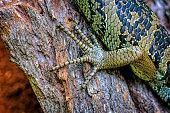 Close up of a lizard foot