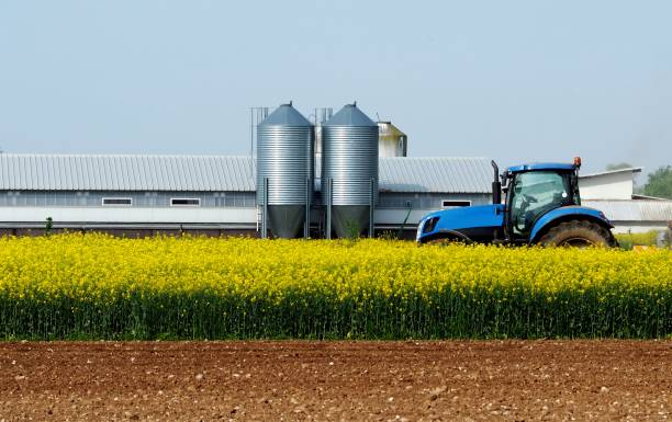 Blue tractor in the middle of a yellow canola field, with an agricultural building and two metal silos on behind. Blue tractor in the middle of a yellow canola field, with an agricultural building and two metal silos on behind. Ploed land in front. canola stock pictures, royalty-free photos & images