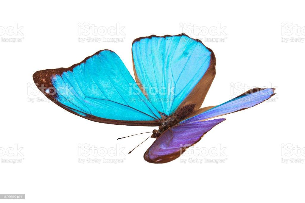 Azul de borboletas tropicais. - foto de acervo