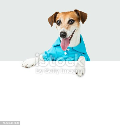 istock Blue t-short smiling dog 509431606