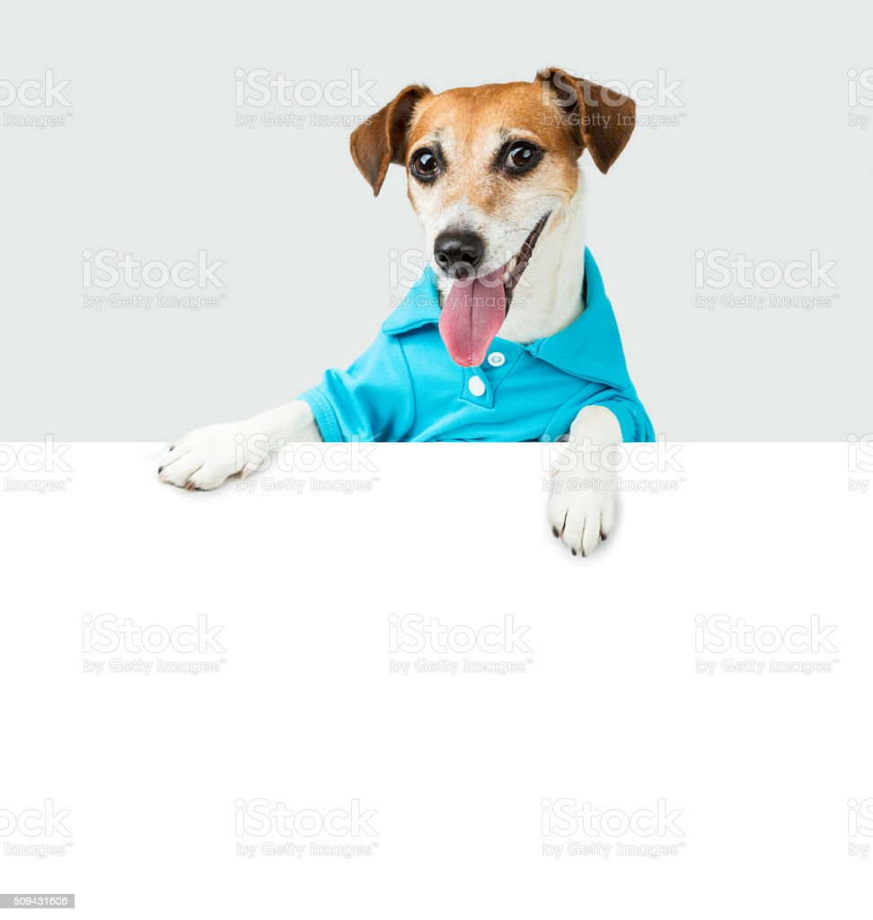 Blue t-short smiling dog stock photo