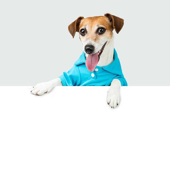 blau t-kurz lächelnd hund - coole liebessprüche stock-fotos und bilder