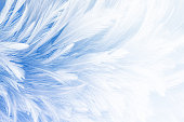 Blue vintage feather texture background
