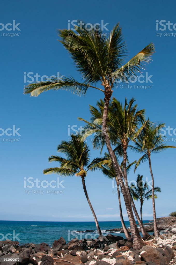 Blue water, palms and volcanic rocks on the shoreline at Lapakahi State Historical Park, Hawaii. stock photo