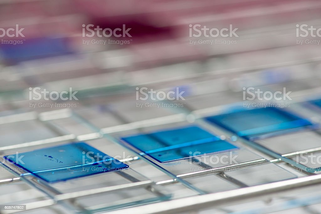 Blue wet mounted glass slides stock photo
