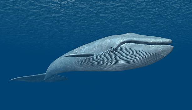 Bleu Whale - Photo